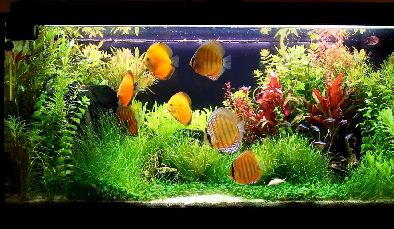Warunki w akwarium 1